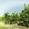 las malas hierbas en cultivo ecologico
