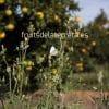 cultivo ecológico cultivo convencional