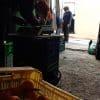 naranjas para grupos de consumo