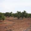 naranjos ecológicos