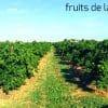 campo de naranjas ecológicas