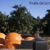 Naranjas ecológicas directas del campo