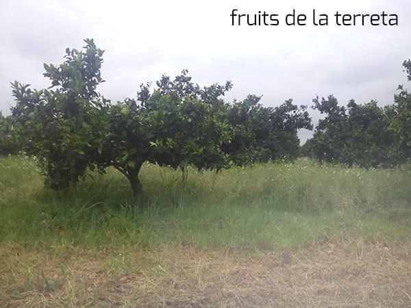 fin de temporada de naranjas