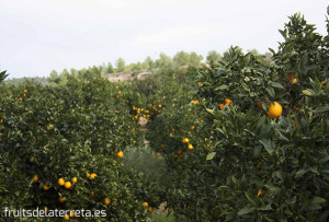 enviar naranjas ecológicas