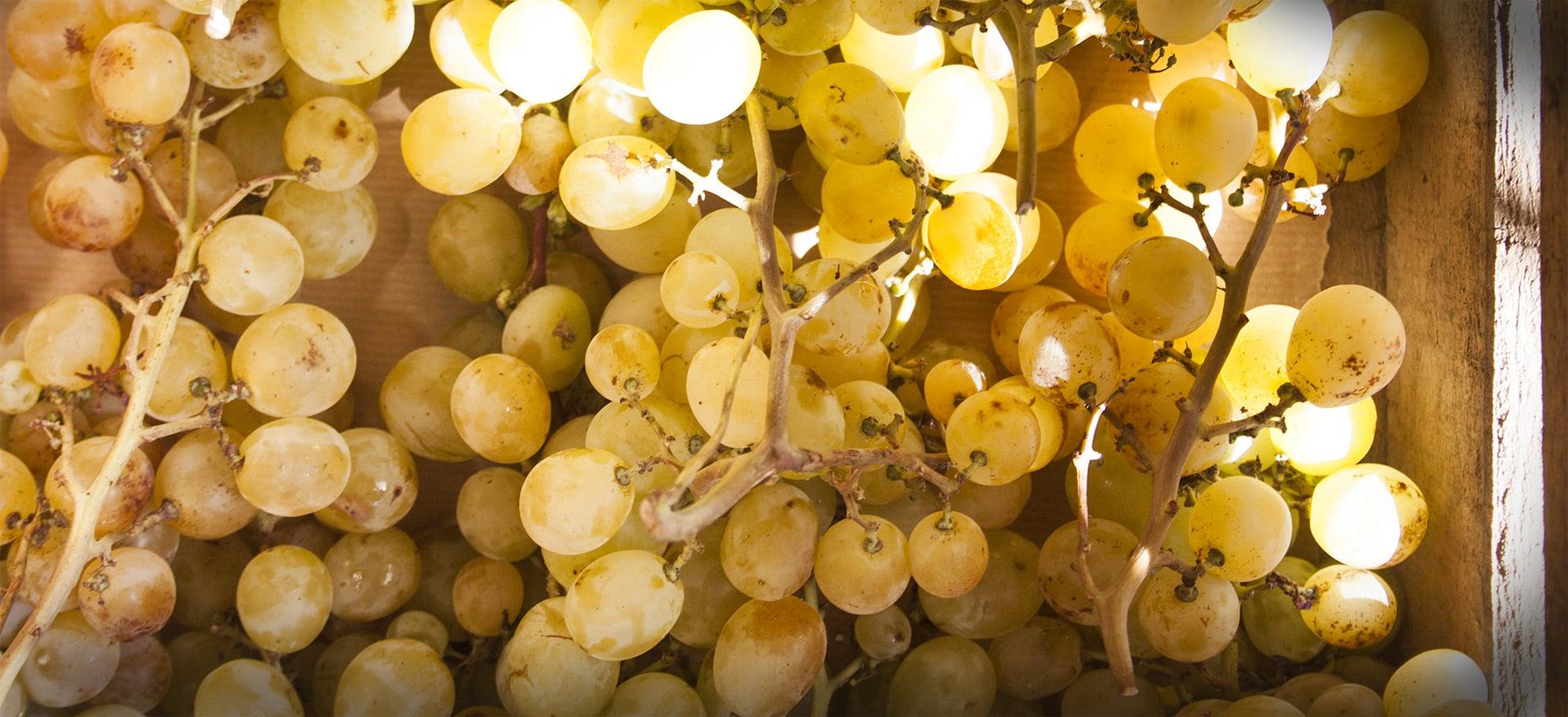 beneficios de la uva