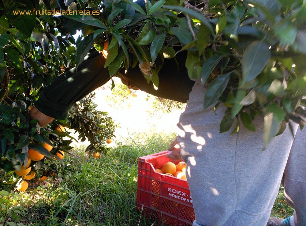 comprar naranjas ecológicas